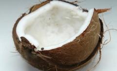 Alternative Mittel gegen Zecken - Kokosöl