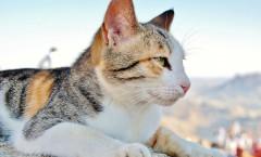 Katzen und ihre Nieren - eine ganz spezielle Beziehung!