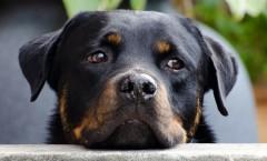 Hunde und ihr Zeitgefühl
