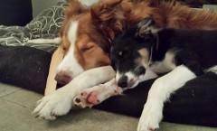 Wie viel Schlaf / Ruhe braucht der Hund?