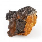 Chaga mushroom on a white background