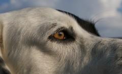 Können Hunde unsere Gefühle erkennen?
