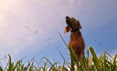 Frühjahrskur - Detox für den Hund - Entgiftung mit Heilpilzen