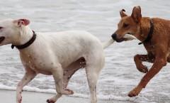 Eifersucht und Hund?