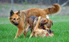 Knurrende Hunde beißen nicht.....