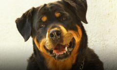 Top 10  der Hunderassen mit der höchsten Tumor-Rate